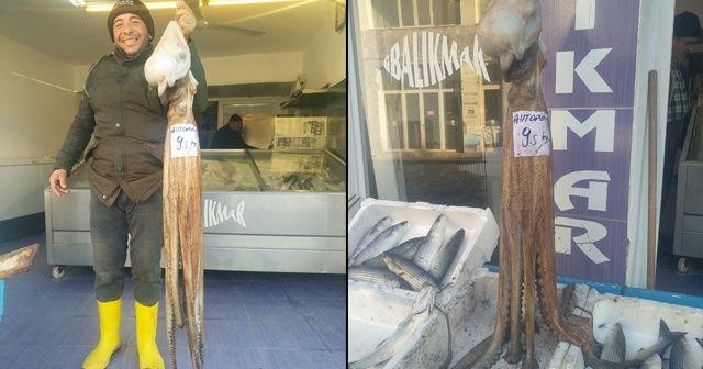 İzmir'de 9,5 kilogram ağırlığında ahtapot yakalandı