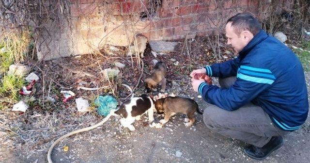 Yavru köpekler çuvala koyularak ölüme terk edildi