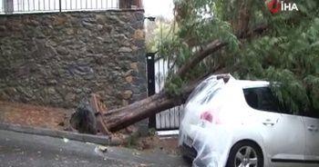 Arnavutköy'de şiddetli rüzgar ağacı kökünden söktü