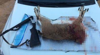 Koruma altındaki dağ keçisini avlayan 4 kişiye ceza yağdı