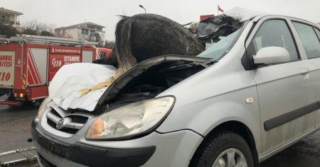 İstanbul'da korkunç kaza: 3 at telef oldu