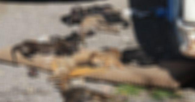 Bornova'da 9 köpek ve 2 kedi yavrusu zehirlenerek öldürüldü