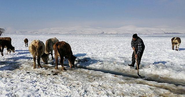 Göl yüzeyindeki buzu kırıp hayvanlarına su içiriyorlar