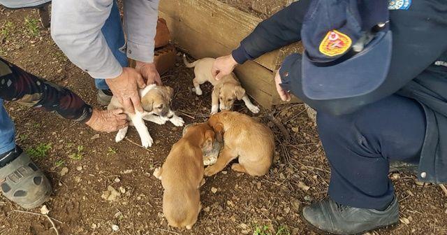 Yavru köpekler itfaiyenin yardımıyla kurtarıldı