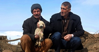 Depremde annesiz kalan kuzular için gözyaşı
