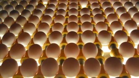 Irak'ın yumurta ithalatı yasağı Suriye ve Kuveyt'e ihracatta rekor getirdi