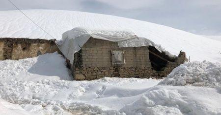 Kar ağırlığına dayanmayan ahır çöktü: 12 koyun telef oldu