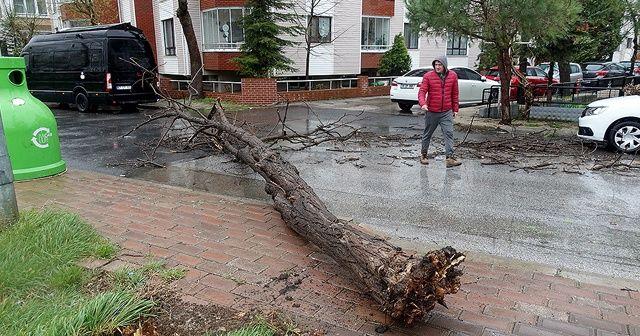 Kırklareli'de şiddetli rüzgar hayatı olumsuz etkiledi