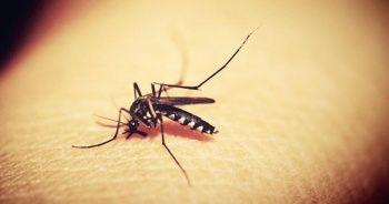 Afrika'da sıtmanın 2025'e kadar yüzde 75 oranında azaltılması hedefleniyor