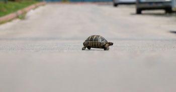 Yollar kaplumbağaya kaldı