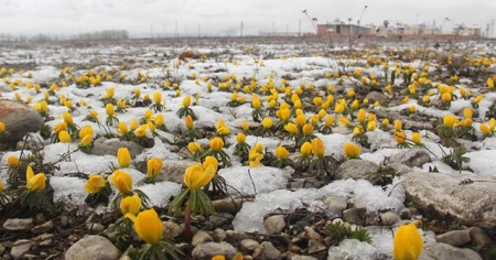 Baharda yağan kar Ovacık'ın doğasına güzellik kattı