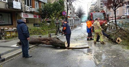 Mecidiyeköy'de fırtınanın etkisiyle devrilen ağaç yolu trafiğe kapattı