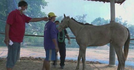 Tayland'da Afrika at vebası salgını patlak verdi: 200 at telef oldu