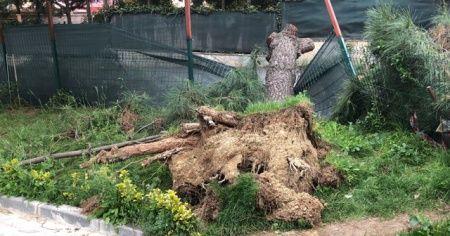 Tekirdağ'da fırtına çatıları uçurdu ağaçları devirdi