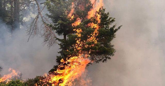 Çobanların yaktığı ateş ormana sıçradı