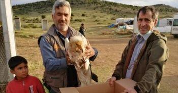 Eskişehir'de üzerinde uydu vericisi takılı küçük akbaba bulundu