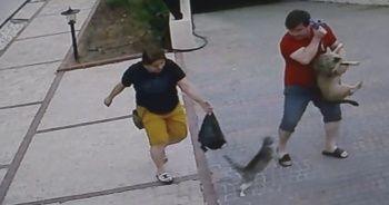 Köpekli aileye saldıran kedi, hem korkuttu hem güldürdü