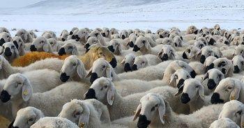 Sivas'ta soğuk hava ve kar yağışı etkili oluyor