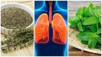 Solunum Sistemi İçin Şifalı Bitkiler