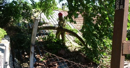 Beykoz'da yarım asırlık dut ağacı binanın üzerine devrildi
