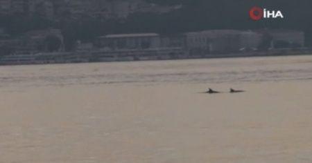İstanbul Boğazına gün doğumuyla yunuslar akın etti