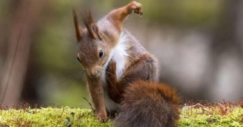 Çocuklara Hayvanlar Nasıl Öğretilir? Hayvanları Tanıyalım