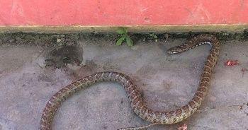 Ülke genelindeki yılan paniği