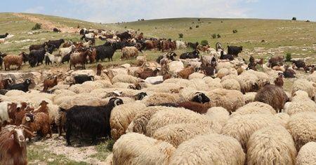 10 bin lira maaşla çalıştıracak çoban bulamıyorlar