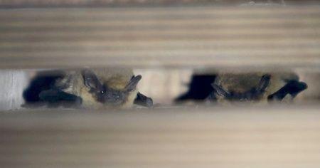 Uzman biyologdan 'yarasaları öldürmeyin' uyarısı