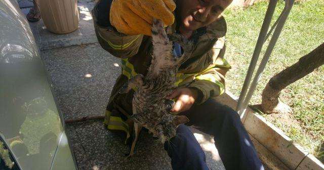 Edremit'te yavru kedi itfaiye ekiplerine zor anlar yaşattı