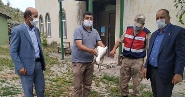 Muş'ta yaralı kuşlar tedavi altına alındı