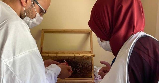 Ordu'da çiftçi kadınların geliri arı sütünden