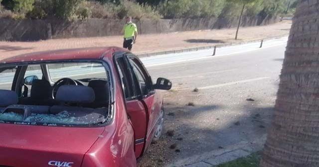 Otomobil palmiyeye çarptı