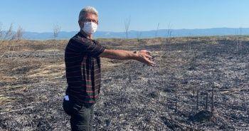 İznik'te sazlık yangınında 60 dönümlük alan kül oldu