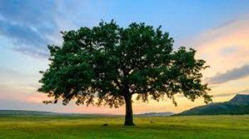 Rüyada Ağaç Görmek Ne Anlama Gelir?