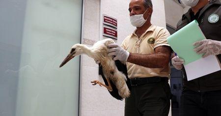 Ayağı kopan leylek yavrusu tedavi altına alındı
