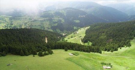 Çam ormanlarının huzur verdiği Kümbet Yaylası cezbediyor