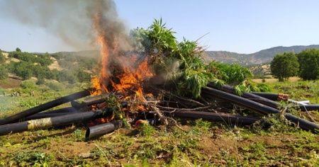 Diyarbakır'da 9 milyon kök kenevir ve 1 ton esrar ele geçirildi