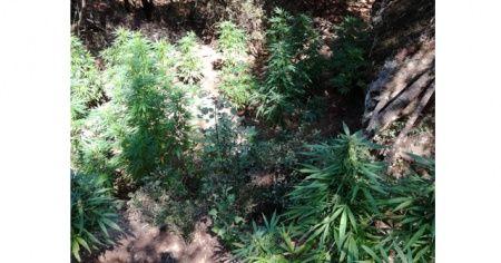 İzmir'in 4 ilçesinde uyuşturucu operasyonu: 4 gözaltı