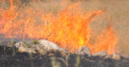 Mardin'de ağaçlık alanda yangın