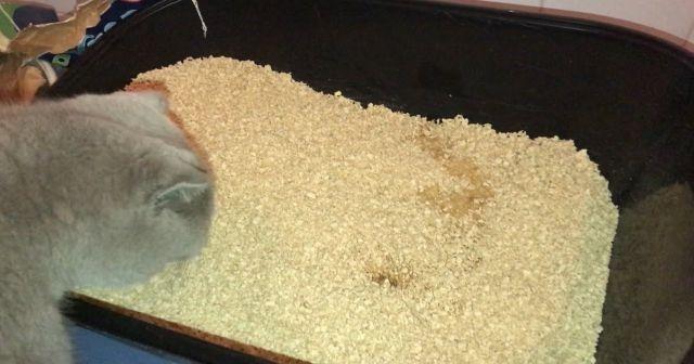 Kedi Kumu Nasıl Temizlenir