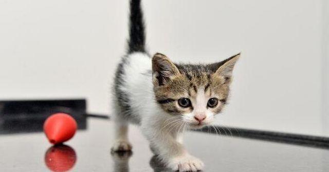 Kedim Kaç Yaşında? Kedilerin Yaşı Nasıl Öğrenilir? Kedinin kaç haftalık olduğunu nasıl Anlarız