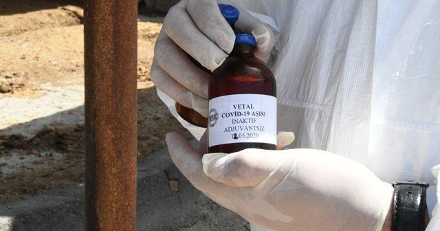 Türkiye'de ve dünyada bir ilk! Atlar Covid-19 antikoru üretti
