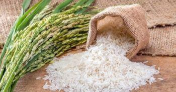 'Pirinç, kontrollü bir şekilde tüketildiğinde, sağlıklı ve besleyici bir besindir'