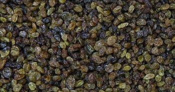 Bakan Pakdemirli, yeni sezon üzüm alım fiyatını açıkladı