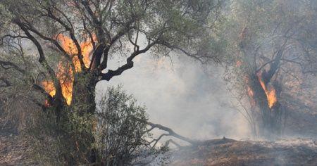 Aydın ve Muğla'da bu yıl 865 hektar alan yandı