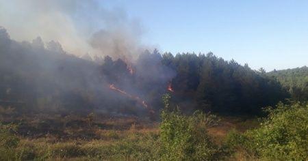 Kastamonu'daki orman yangını söndürüldü