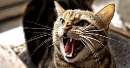 Kedinin durup dururken saldırması nasıl engellenir