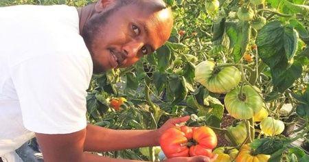 Somalili üniversite öğrencisi Tekirdağ'da 1 kilo 130 gram ağırlığında domates yetiştirdi