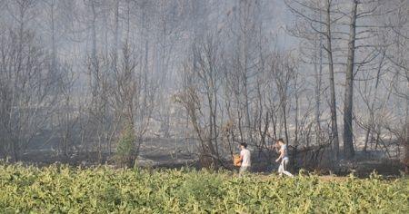 Tutuşan balya makinesi 8 hektar ormanlık alanı kül etti